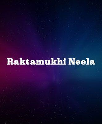 Raktamukhi Neela